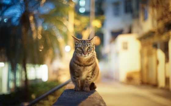 город, вечер, кот