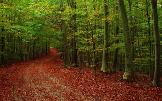 лес, природа, дорога, листва, осень, яndex, trees,