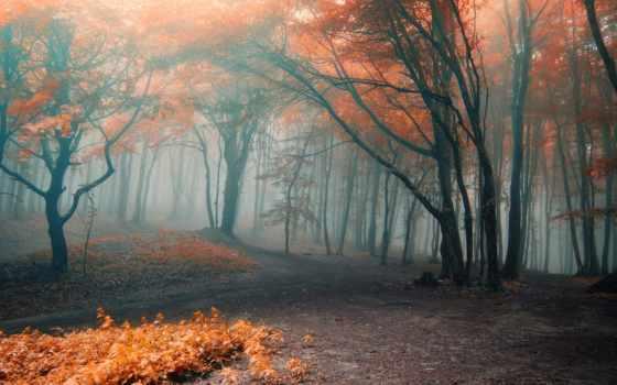 туман, осень, trees, лес, дорога, природа, листва, коллекция,