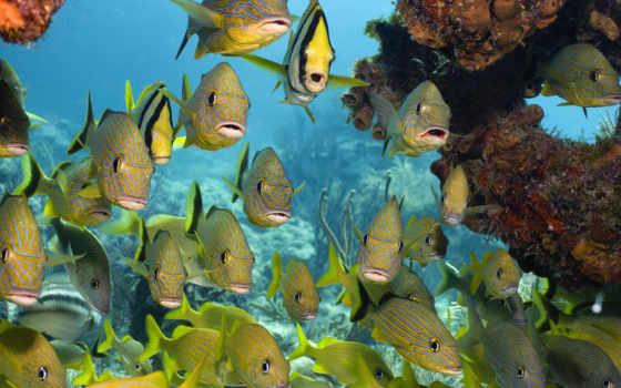 pisces, кораллы, море, underwater, world, рыбки, zhivotnye, косяк,