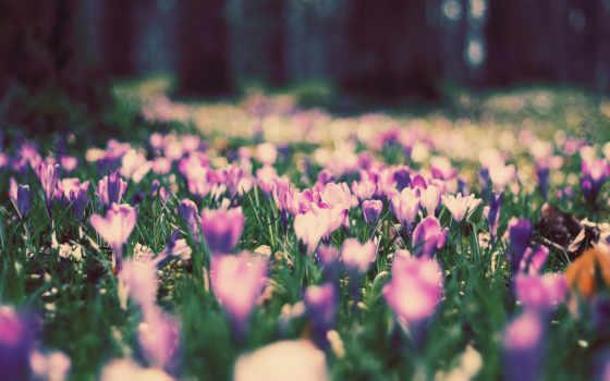 цветы, поляна, природа