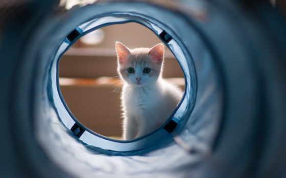 категория, кошки, котенок