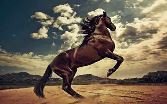 horses, лошадь, caballos