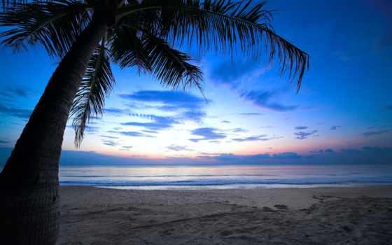 del, мар, playa, cielo, palmera, amanecer, tropical, сол, caribe, nublado,