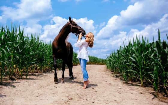 caballo, photos, fotos, imágenes, picssr, nicola, flickr, ко, znajdziesz, fondos,