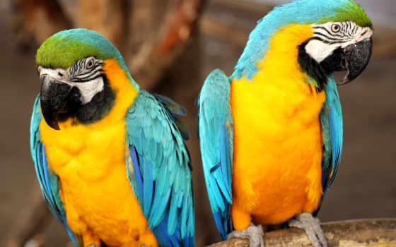 фотообои, попугаи, настенные, фрески, красивые, животными, кухню, красивая, доставка, купить, gate,