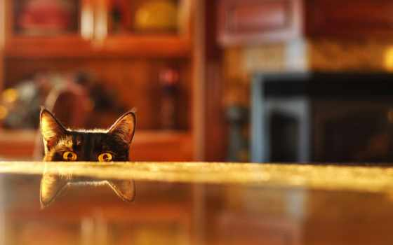 кот, peep, отражение, комната, морда