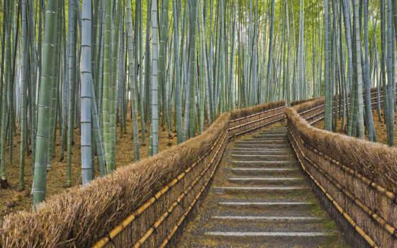 лес, бамбук, sagannyi, коллекция, kyoto, japanese, природа, grove, located, step