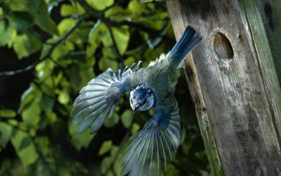 птицы, птица, животные