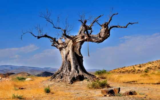 дерево, пустыня, мертвое