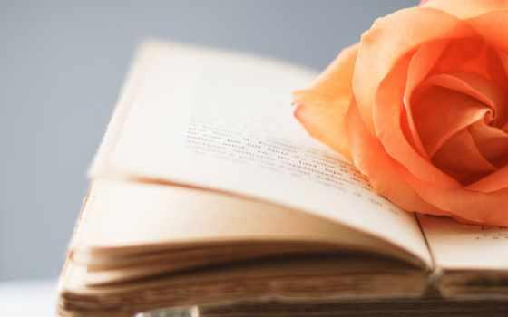 книга, стиль, книжка, цветы, страницы, роза, yellow,