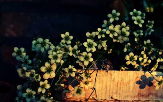 flowers, закат, pardesi, mahi, bollywood, loay, brass,