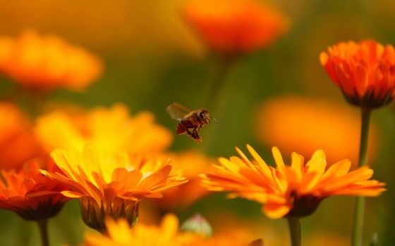 календула, мы, то, кем, люди, других, множеством, видов, бесчисленным, эти, день, las, июня, планету, животные, flores, них, забавные,