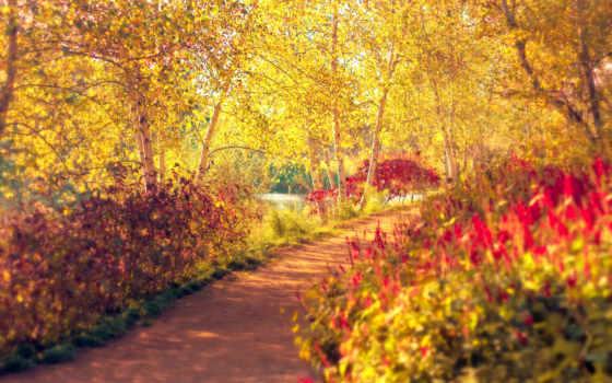 park, osen, деревя