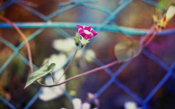 цветы, розовые, осень