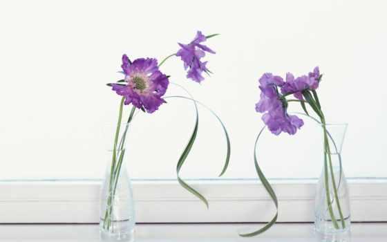 цветы, вазы, цветами