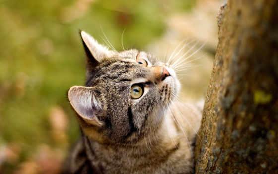 кошки, zhivotnye, самая