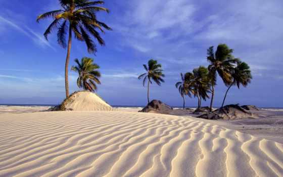 песок, knowledge, palm
