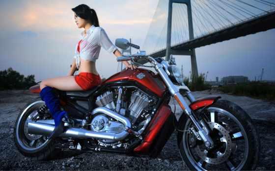 harley, davidson, мотоцикл, девушка, мото, качестве, высоком, базе, нояб,
