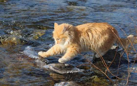 широкоформатные, кот, коты, весна, микс, пушистый, природа, заставки, full, cvety,