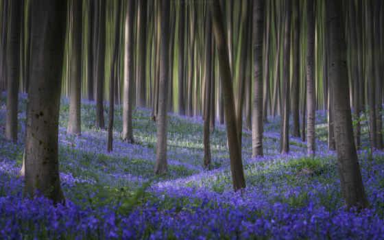 fore, цветы, лес, весна, hardwood, northern, дерево