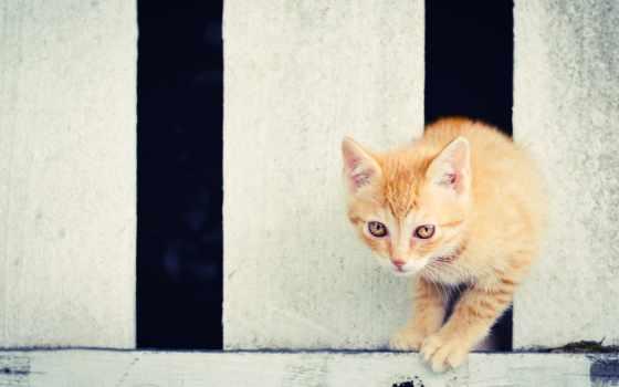забор, кошка