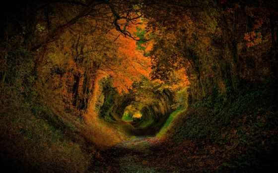 hole, кролик, desktop, природа, тона, листья, pin, страница, осень,