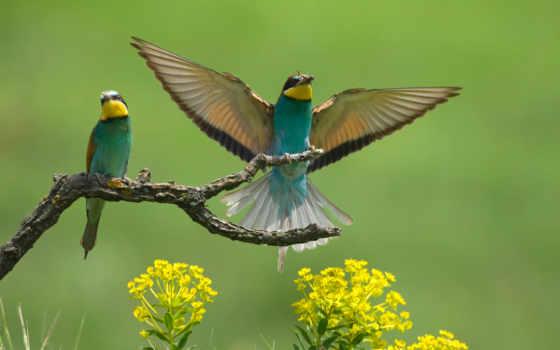 птицы, branch, крылья, волна, cvety, pair, птица, ветке,