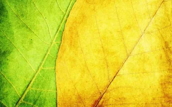 листва, зелёный, широкоформатные, house, текстуры, ghost, brass,