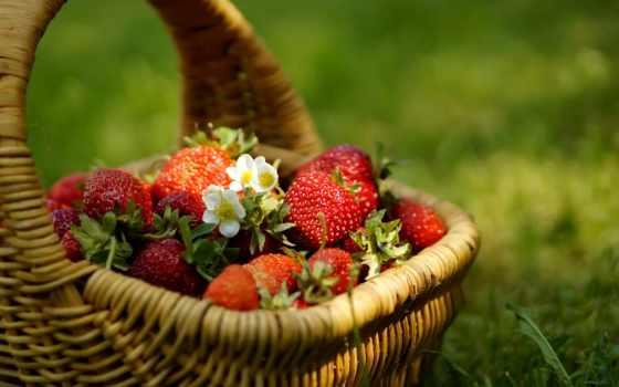 клубника, cvety, ягоды, корзина, корзинке, еда,