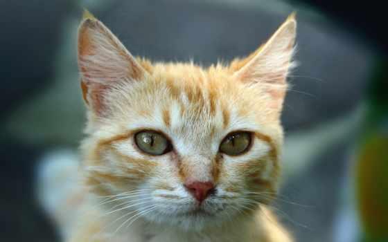 ecran, chat, chaton, fond, chatons, bebe, chats, mignon, animaux, fonds, télécharger,