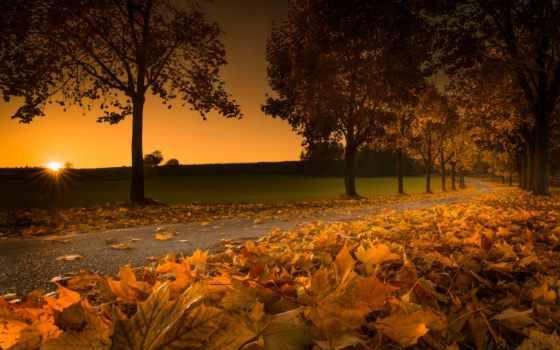 осень, листва, закат