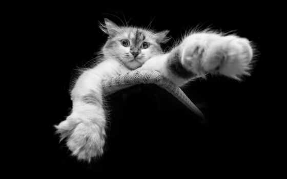 title, white, кот, black, лапа, аватар, new, альпы