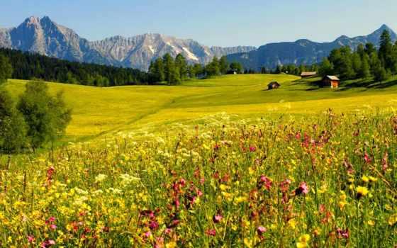 пейзажи, цветочное поле