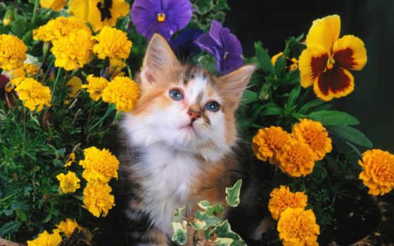 кот, морда, пятнистый
