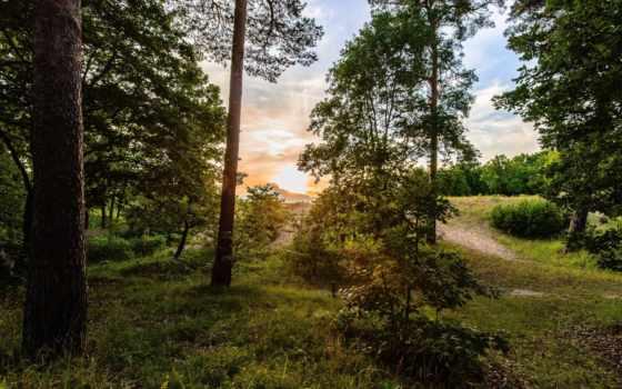 красивые, пейзажи -, лесные, природы, природа, лес, collector, только, rising, небо,