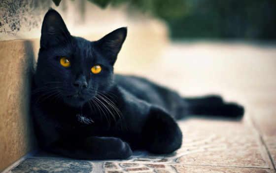 кошки, кот, свет, улица, смотрит, black, zhivotnye, котэ,