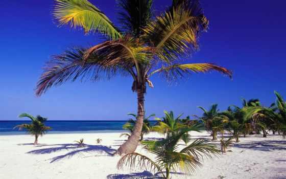 пальмы, ocean, океана, мексиканский, море, мексике, windows, берегу, девушка, берег, горизонт,