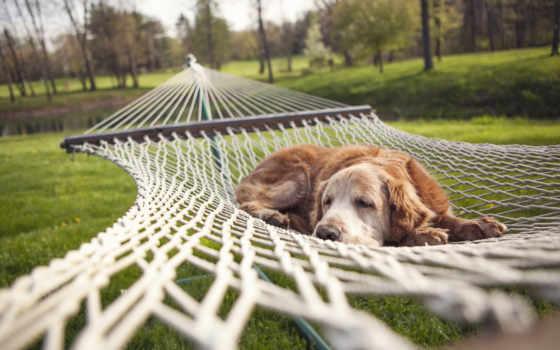 собака, relaxing, desktop, mac, путешествуя,