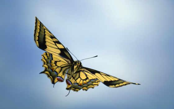 бабочка, полете, бабочки