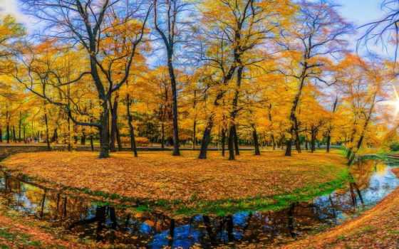 листва, collector, осень, широкоформатных, осенние,