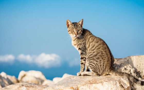 кот, animal, wild
