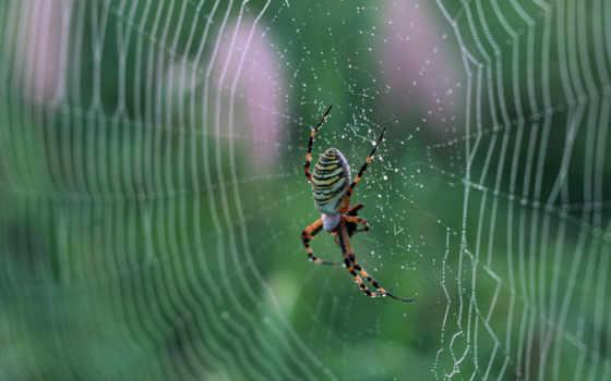 spider, web, pantalla