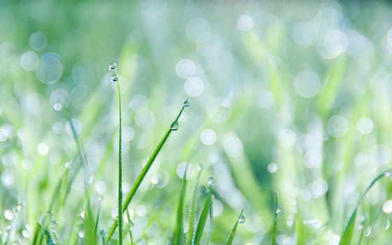 grass, dew, free