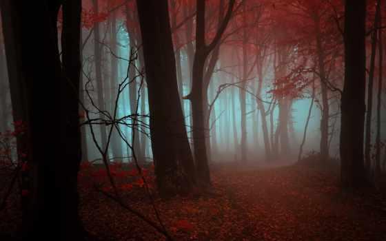лес, листья, осень