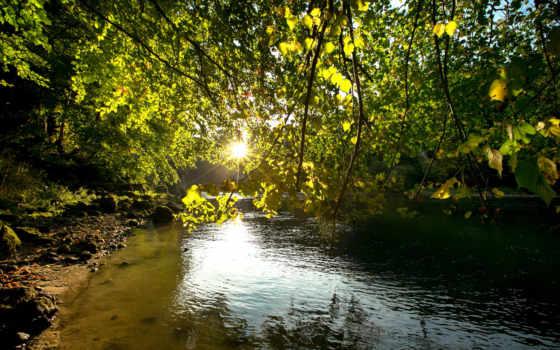 ветки, изображение, природа, картинка, debrecen, rivers,