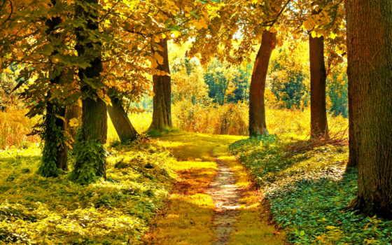 осень, landscape, пейзажи -, лес, осенние, природа, осеннего, trees, листва, день,