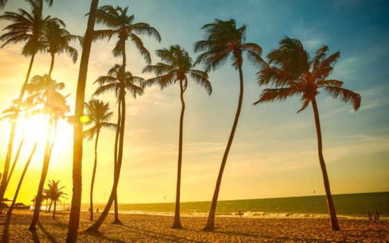 palm, закат, пляж, дерево, tropical, море, dusk, trees, resolution,