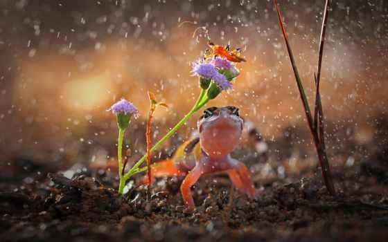 rainy, капли, ящерица, цветок,