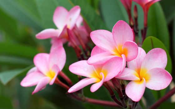 цветы, flowers, more, вышивка, desktop, are, алмазная,